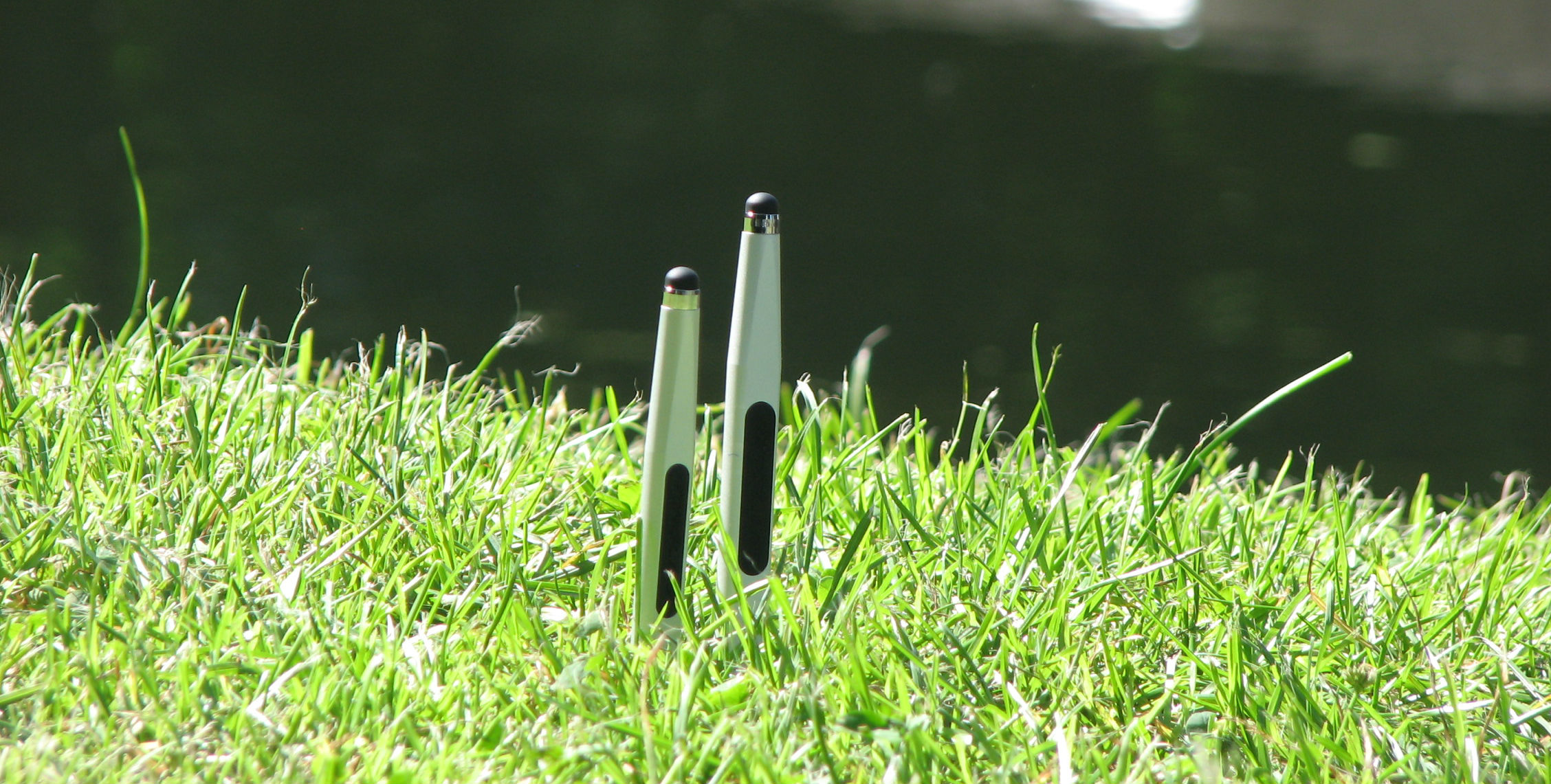 Maglus + Mini Maglus out in the park